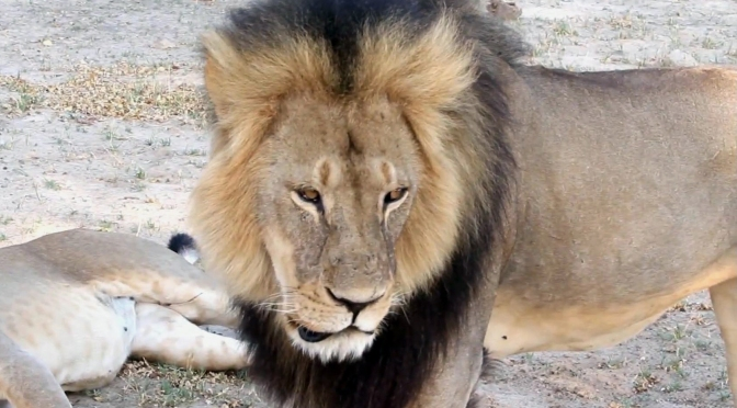 The Lion-Killing Dentist Is Getting Totally Savaged Online